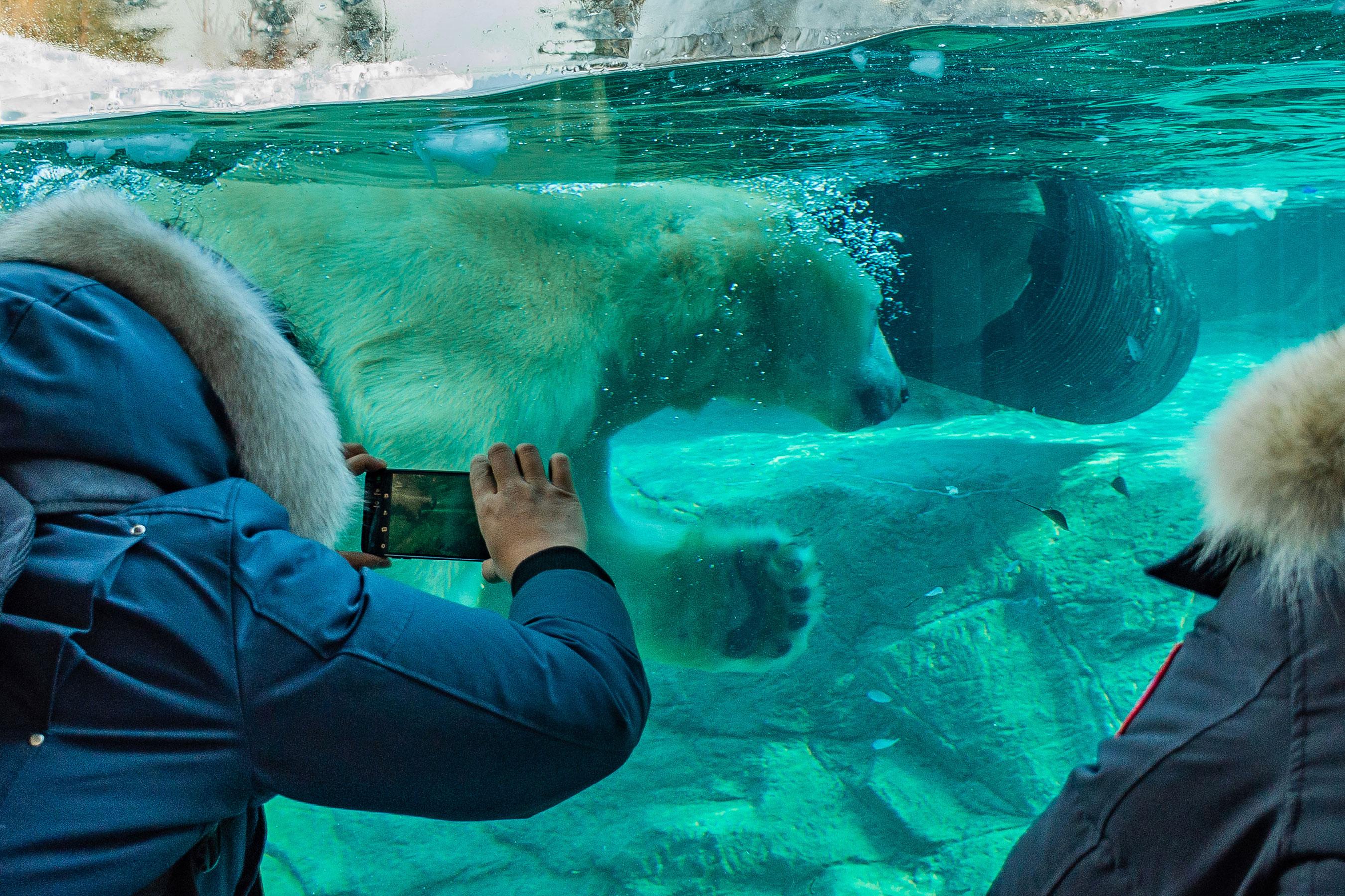 Cochrane Polar Bear Habitat